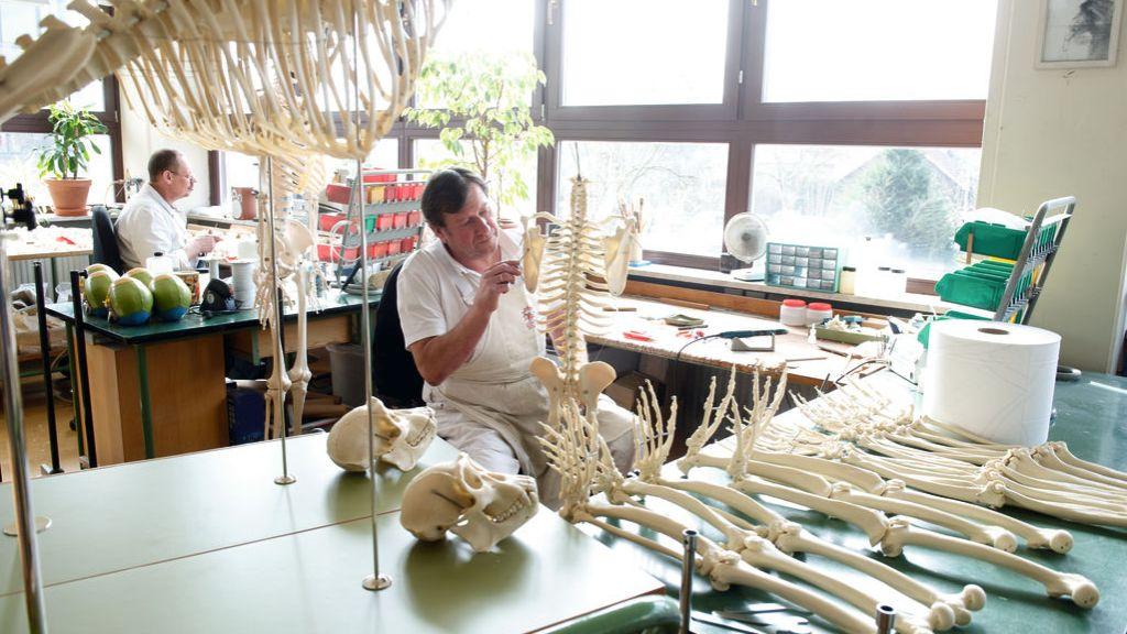Skelettmontage