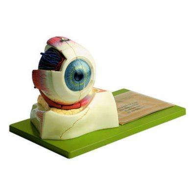 CS 10 Eyeball