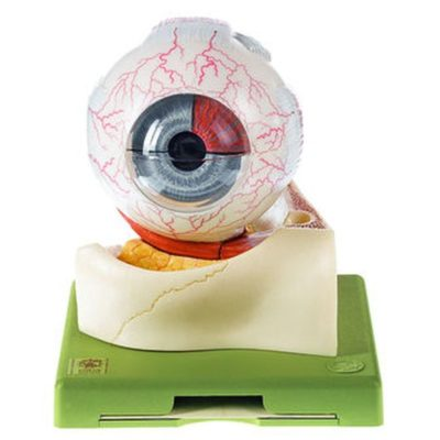 CS 1 Eyeball