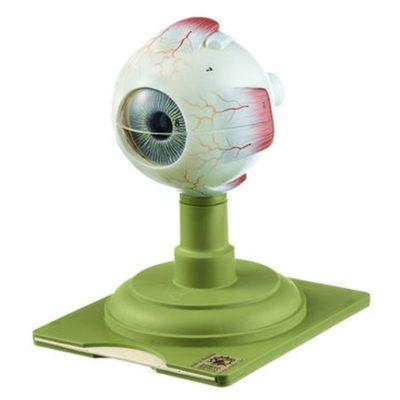 CS 4 Eyeball