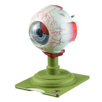 CS 5 Eyeball