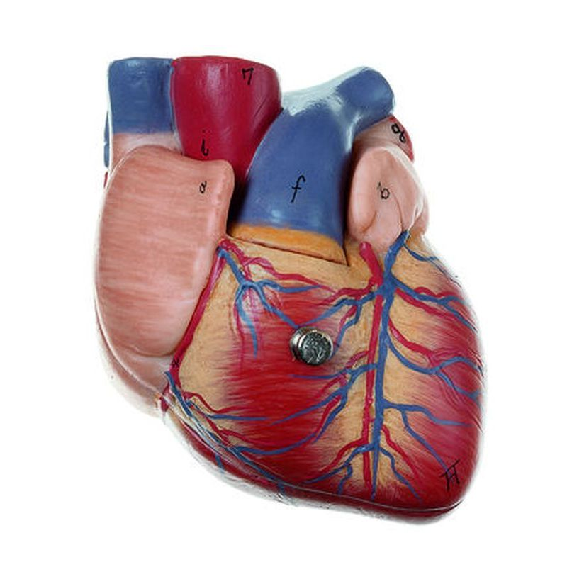Hs 2 Heart Biomedical Models